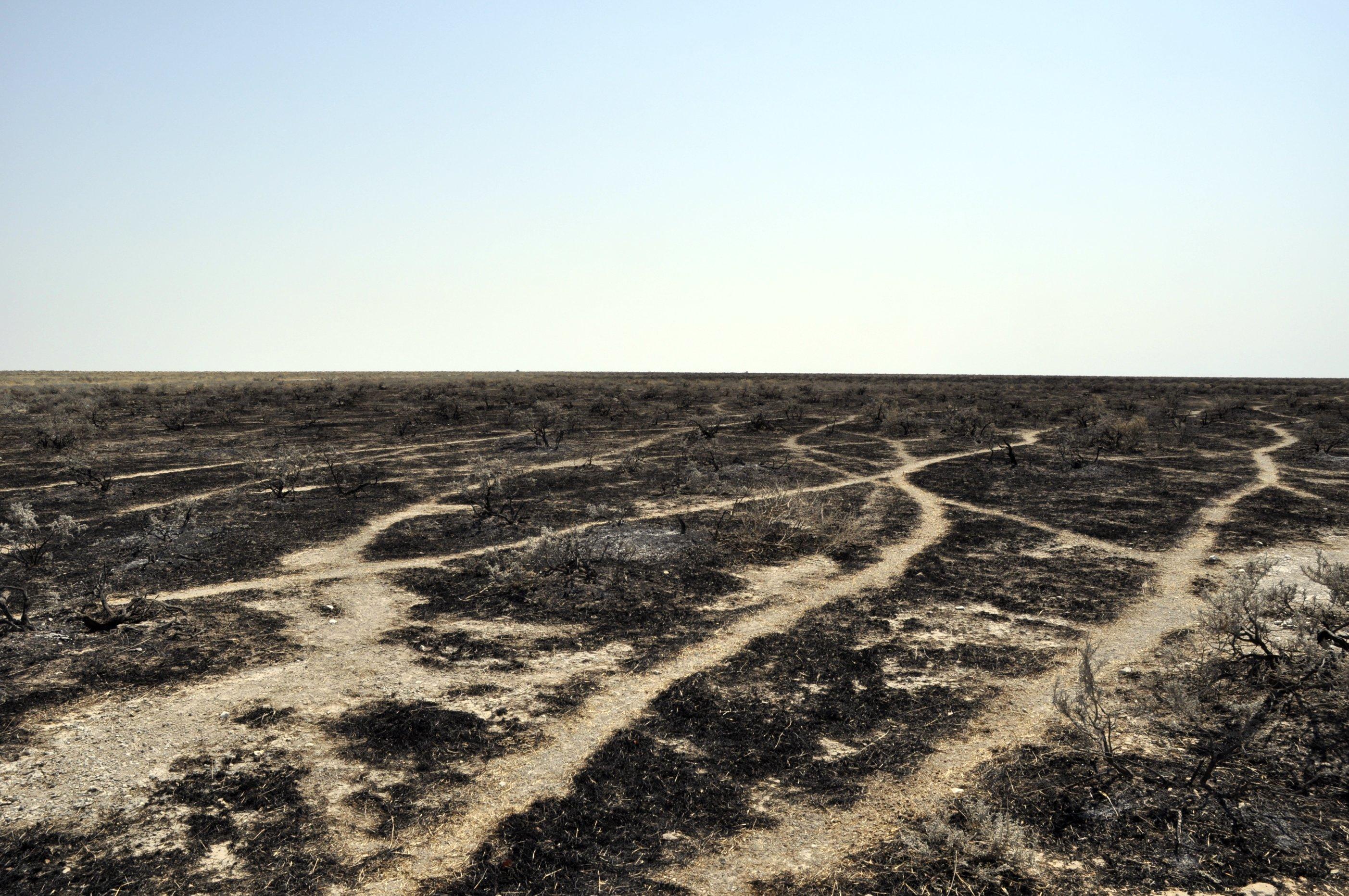 Spaljena zemlja. Foto: Pim Stouten (http://www.flickr.com/photos/pimgmx/)