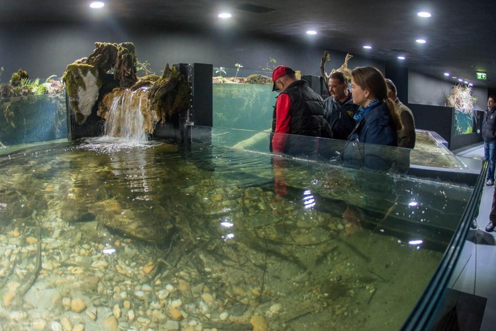 Aquatika. Foto: Denis Stošić. Izvor http://aquariumkarlovac.com/akvarij/
